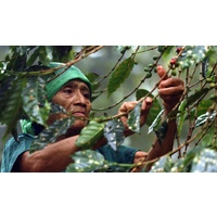 Rainforest Alliance Honduras