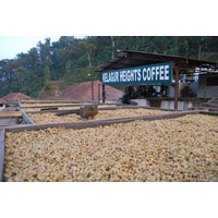 India Kelagur Heights Natural - 1kg whole bean